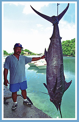 409 lbs. Black Marlin