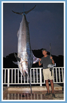 560 lbs. Black Marlin